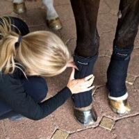 Back On Track Scandic PK Leg Pads / Bandage Liners – Pair
