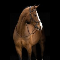 Rambo Micklem Multi Bitless Bridle