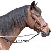 Aram Rose Hackamore Bitless Bridle