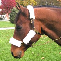 Best Friend Halter / Muzzle Synthetic Fleece Cover