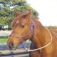 Natural Horsemanship Equipment