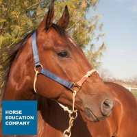 Classic Nylon Hybrid Horse Halter