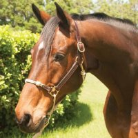 Classic Leather Hybrid Horse Halter
