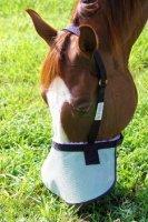 Nags Horse Ranch Halter Free Nose Shade