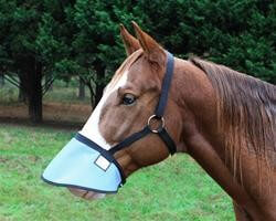 Nags Horse Ranch Halter Free Nose Shade with throat latch