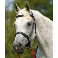 Zilco Synthetic Sidepull Bitless Bridle